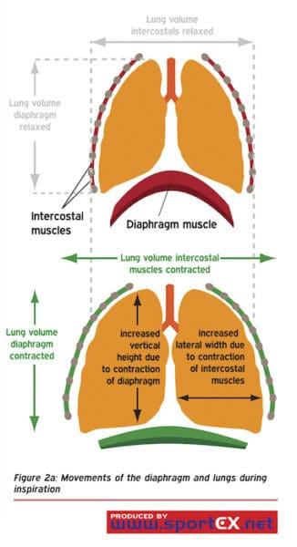 Diaphragm action